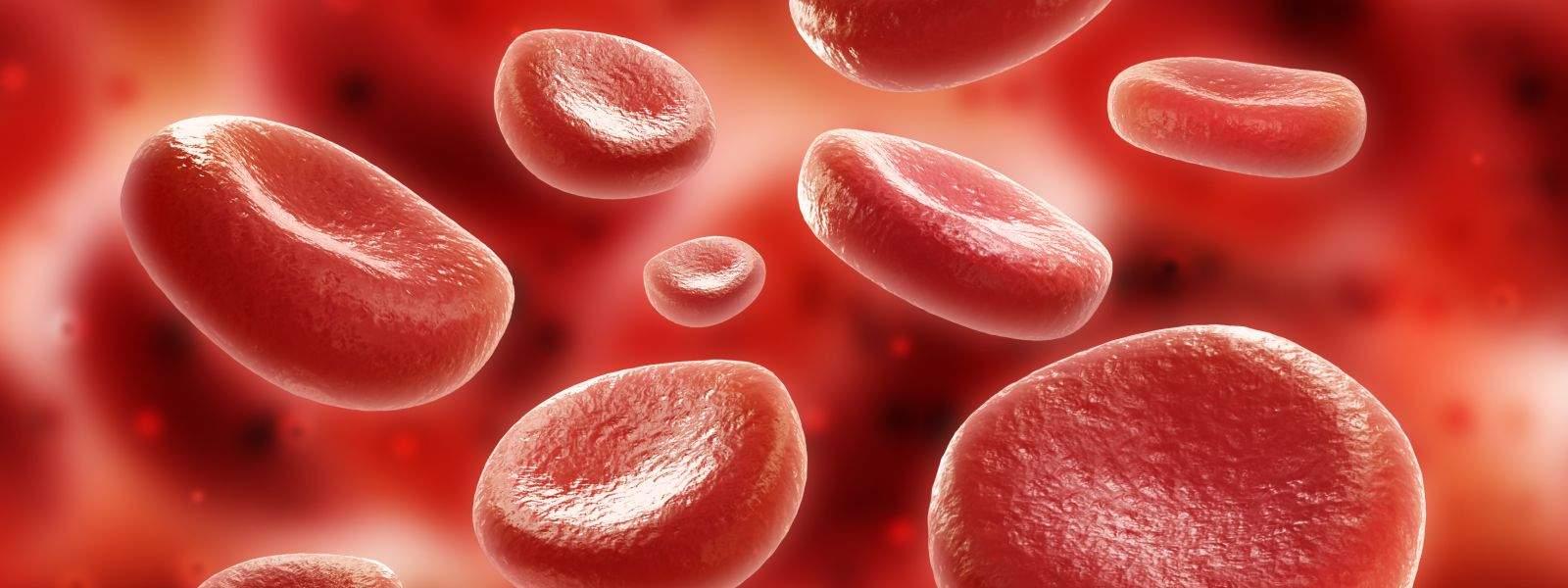 Hematologia Clínica e Banco De Sangue