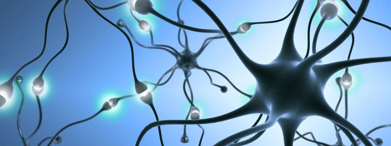 Neurofisiologia Clínica