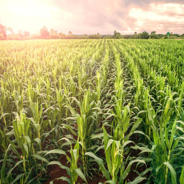 MBA-Agronegócio-e-Agroindústria-com-Ênfase-em-Sustentabilidade