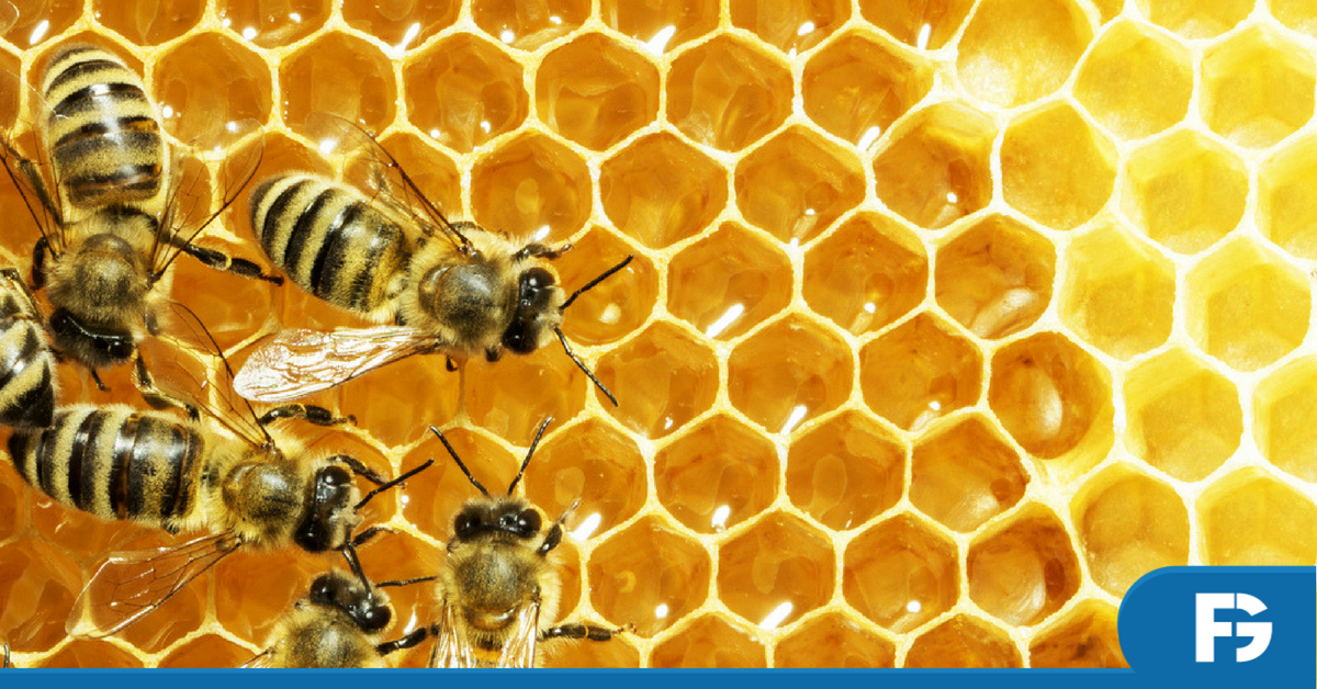 alergia-abelha-soro