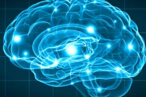 Miniatura-Neuroendocrinologia