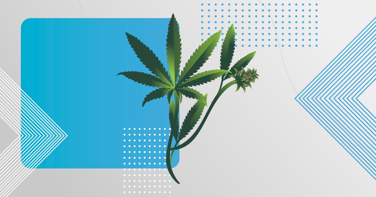 Cannabis para uso medicinal no Brasil é aprovada